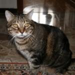 Disavventura per un gatto (foto di repertorio)