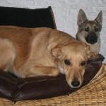 Greta e Matilda, cucciole in cerca di affetto