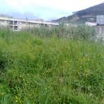 L'erba alta nella zona di piazza Salvo D'Acquisto