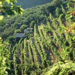Uno scorcio agricolo della Val Graveglia