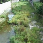 Il torrente Rupinaro invaso dalla vegetazione