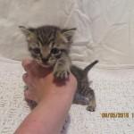 La gattina trovata nei pressi dell'Entella