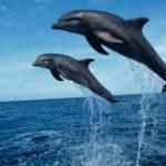 Sono numerosi i delfini nel nostro mare