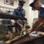 Il materiale e l'animale sequestrati