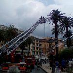 I vigili del fuoco intervengono sulla palma