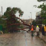 Giornata di alberi caduti