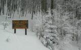 Foresta Monte Penna