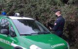 1 CC Forestali