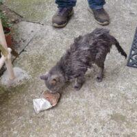 soccorso gatto